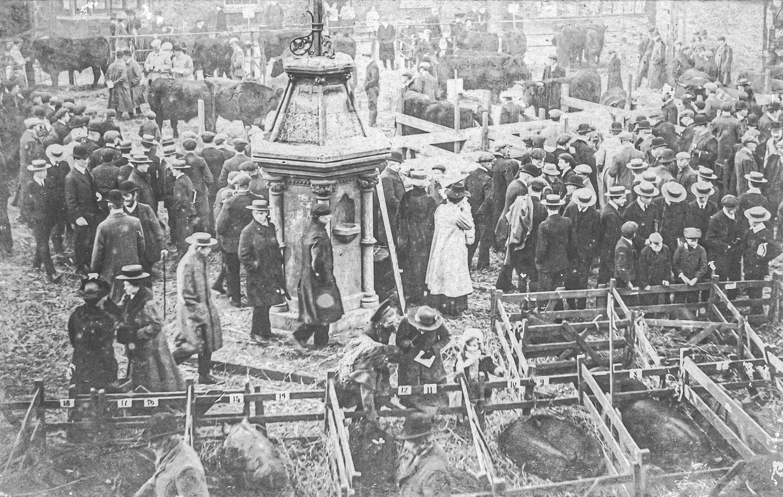 Uppingham Fatstock in 1905.