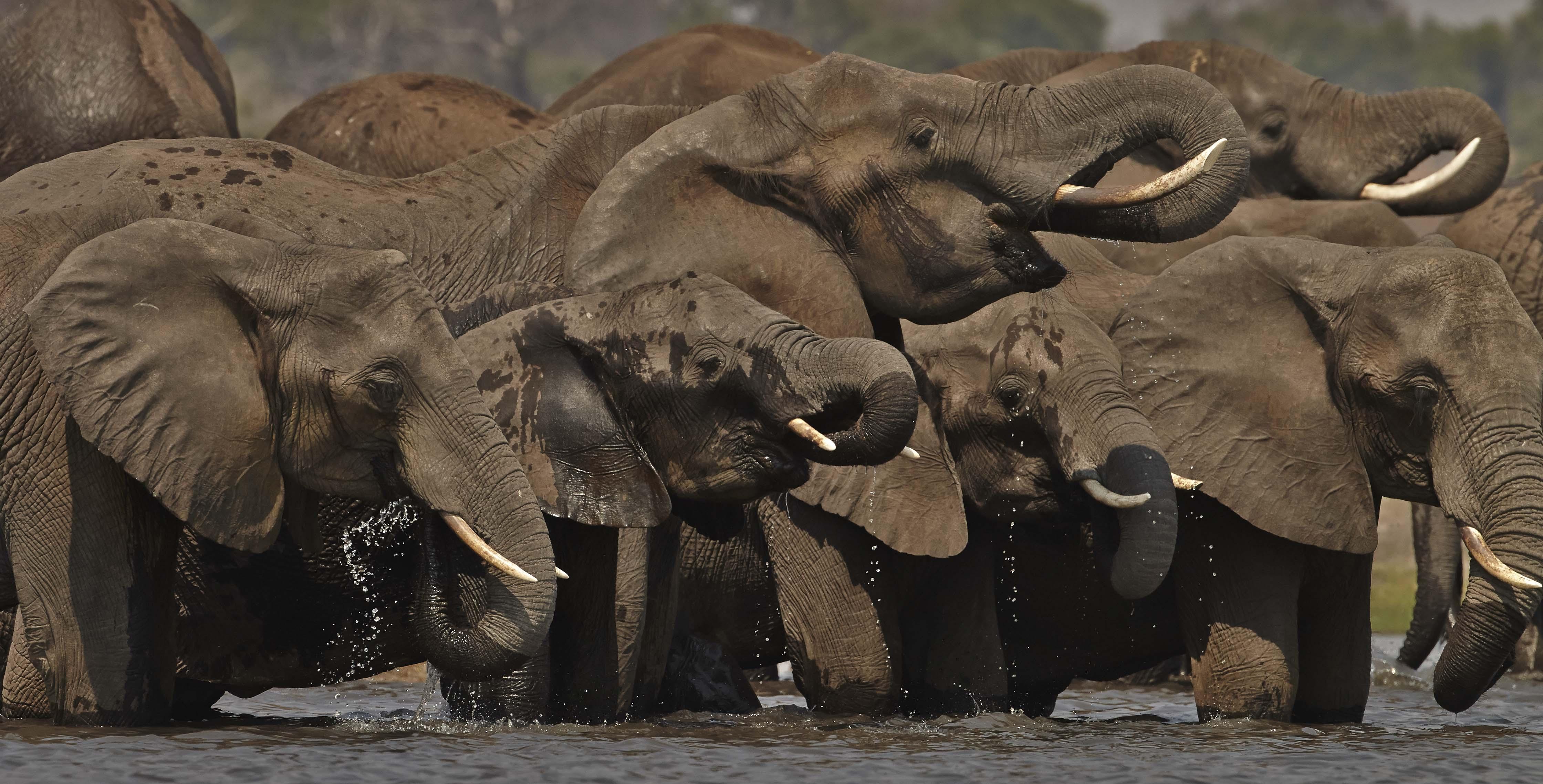 Elephants photographed by John Wright