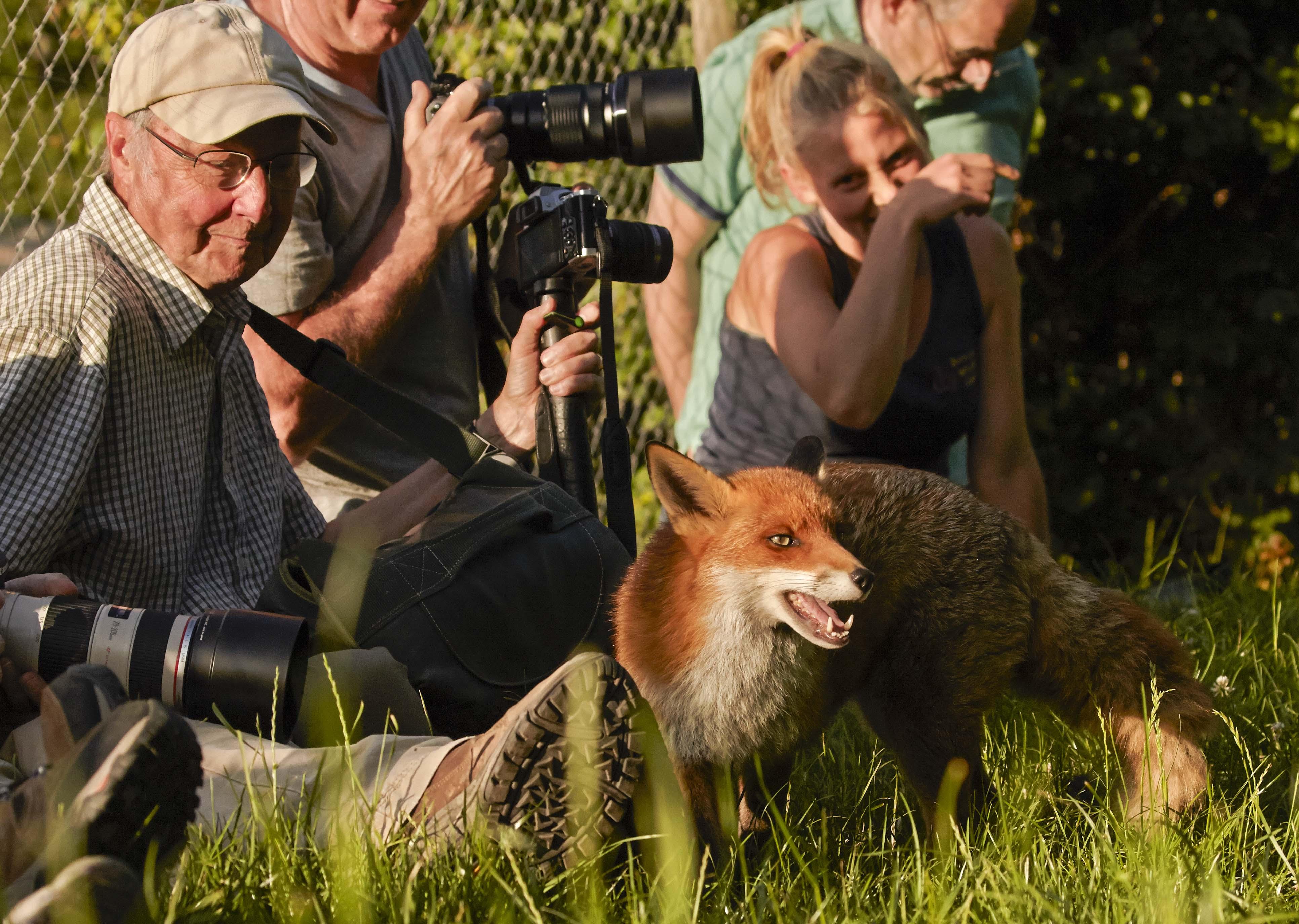 Wildlife photography courses with Rutland's John Wright.