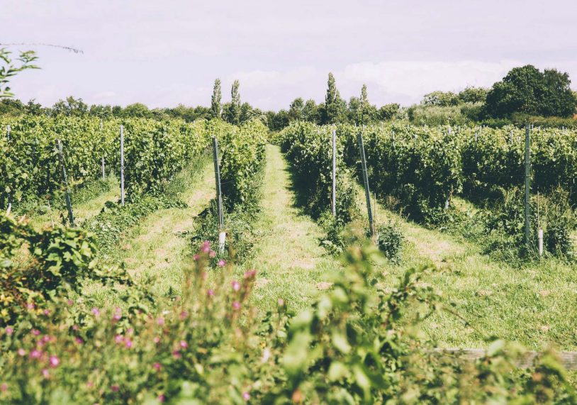 The Hanwell Winemaking Estate.